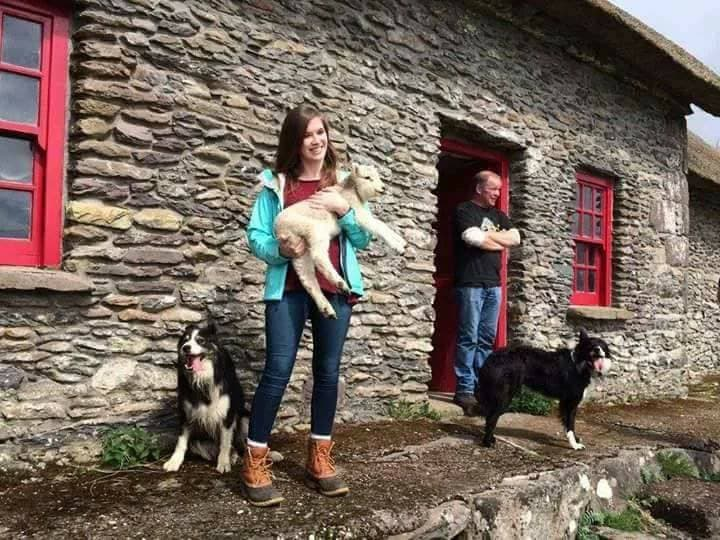 Sheepdogs Kerry